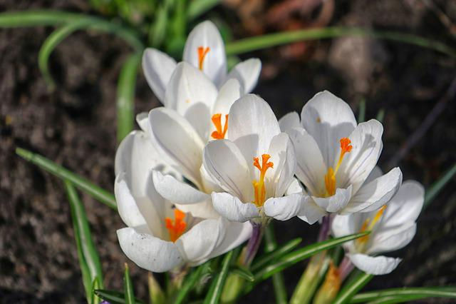 Nature, Flower, Plant, Season, Garden
