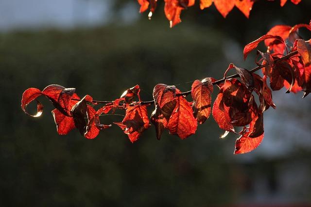 Branch, Leaves, Nature, Season, Plant, Tree