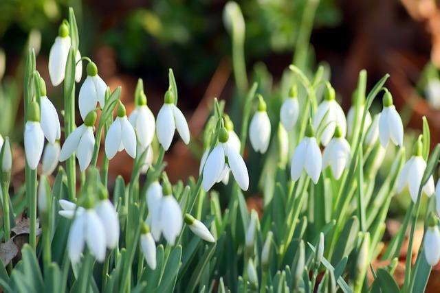 Flower, Nature, Season, Plant, Leaf, January