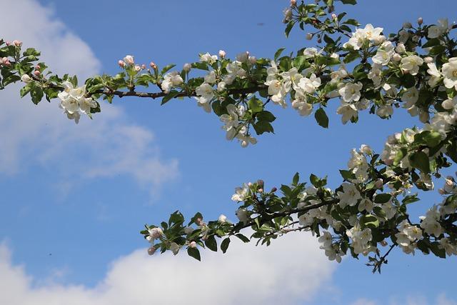 Spring, Sad, Fruit Trees, Tree, Branch, Season, Plant
