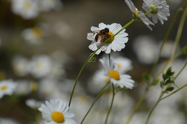 Nature, Flower, Plant, Summer, Season