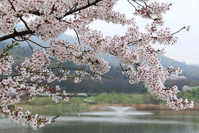 Wood, Cherry Tree, Quarter, Season, Nature