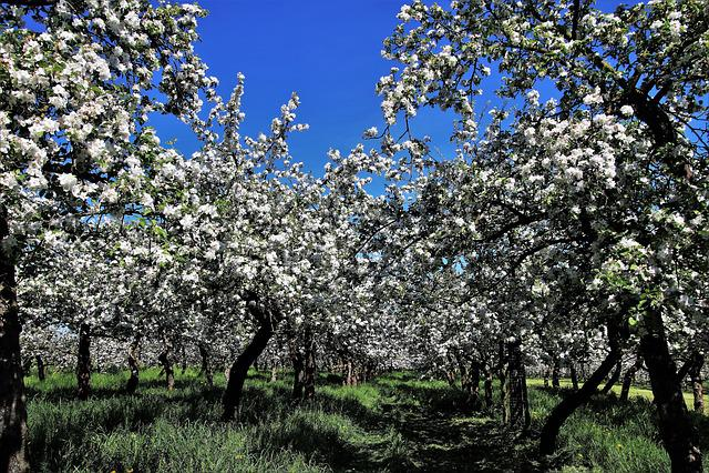 Tree, Sad, Branch, Flower, Season, Nature, Spring