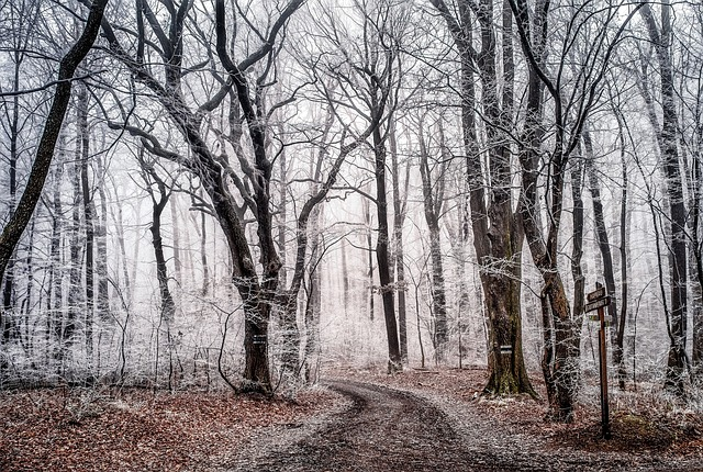 Wood, Tree, Landscape, Nature, Season, Winter, Frost