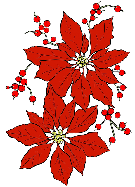 Poinsettia, Christmas, Red Flower, Seasonal, Isolated