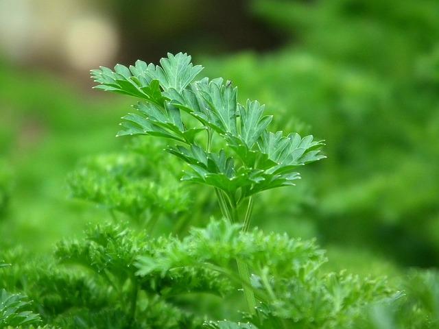 Parsley, Seasoning, Salad, Greens, Green, Leaves, Food