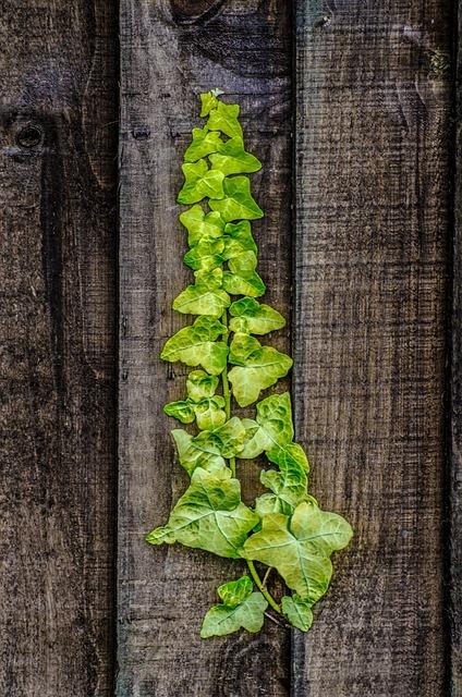 Plant, Leaves, Leaf, Green Nature, Seasons, Decoration