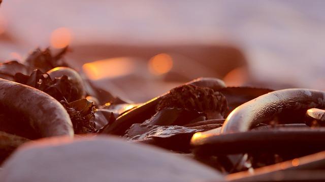 Sunset, Kelp, Ocean, Bokeh, Seaweed, Coast, Scenic