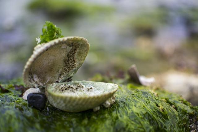 Clam, Shell, Sea, Treasure, Moss, Seaweed, Mystery