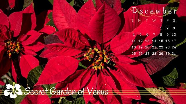 Secret Garden Of Venus, Calendar, December, Poinsettia
