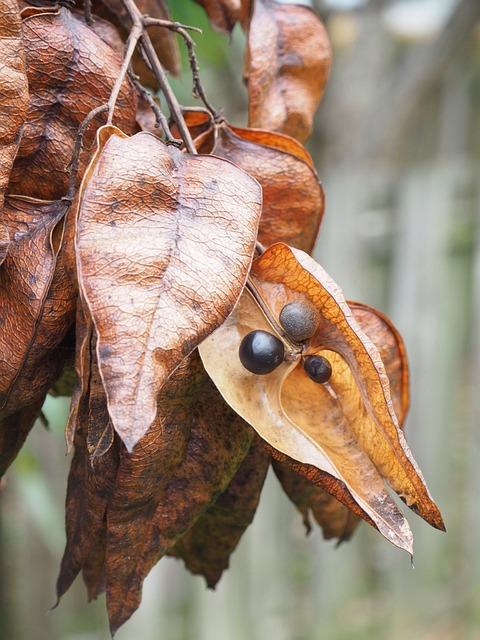 Seed, Pod, Dried, Plant, Tree, Fall