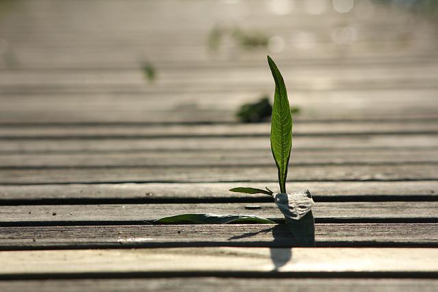 Seedling, Hay, Pier, Board, Green, Leaf, The Vitality