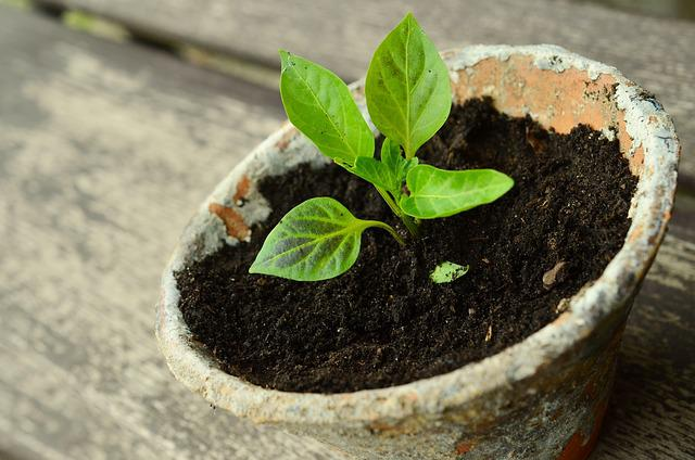Plant, Young Plants, Small Plant, Seedling