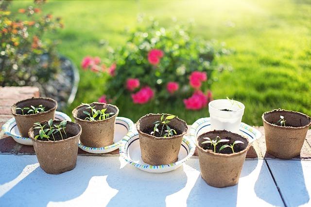 Seedlings, Planting, Gardening, Green, Growing, Spring