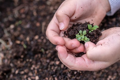 Seedlings, Seed, Children's Hands, Growth