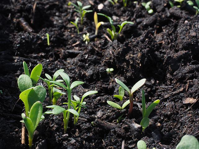 Flowers, Sowing, Growth, Seedlings, Plant, Potting Soil