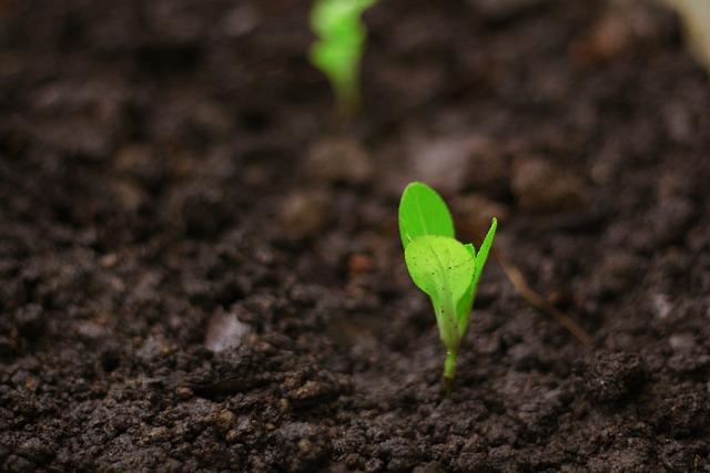 Seedlings For Planting, Changes, Seedlings, Plantation
