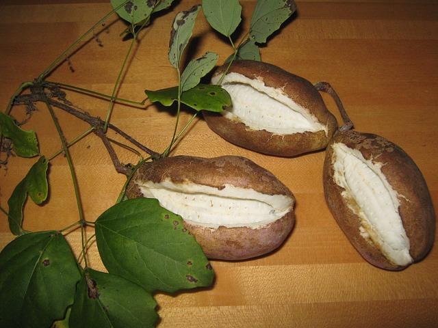 Akebia, Plant, Seeds, Fruit, Akebia Quinata