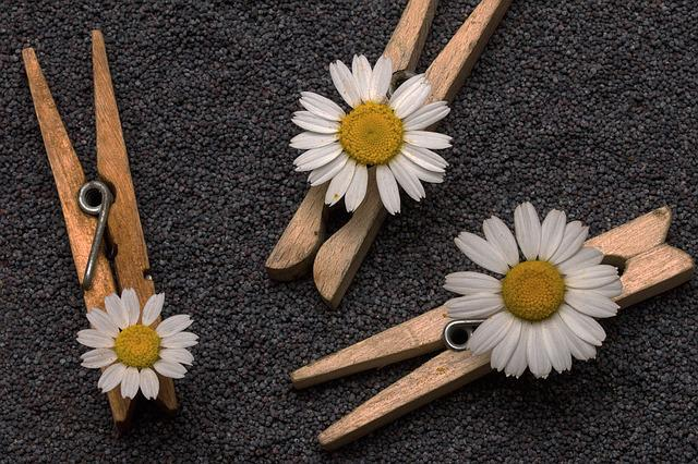 Seeds, Poppy Seeds, Clothespins, Flowers