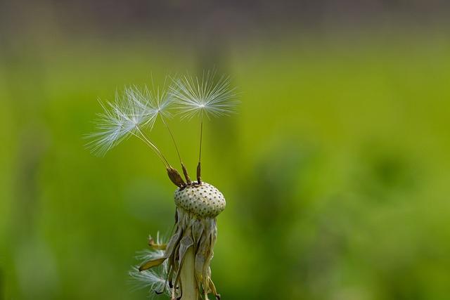 Dandelion, Spring, Close, Macro, Seeds, Flying Seeds