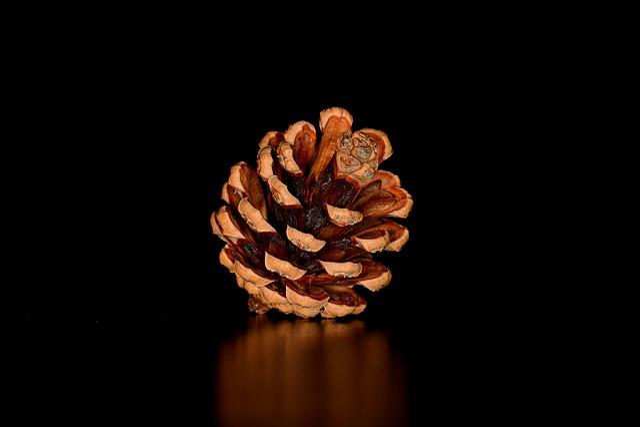 Pine Cone, Tap, Seeds, Pine Cones