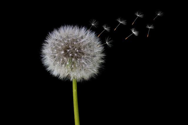 Dandelion, Seeds, Dandelion Seeds, Umbrella, Close
