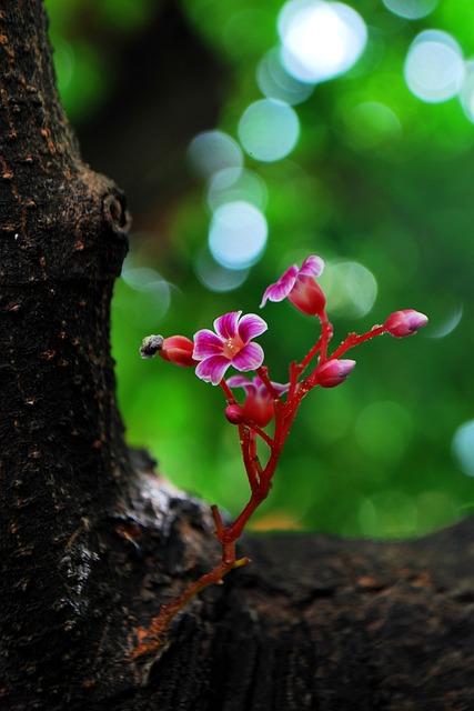 Sent Flowers Term, Little Flower, Cute