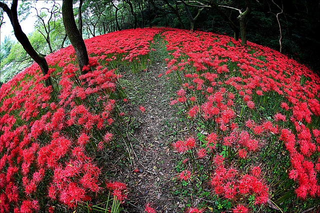 Flowers, Nature, Flowers For, Valley, Red, Seonunsa