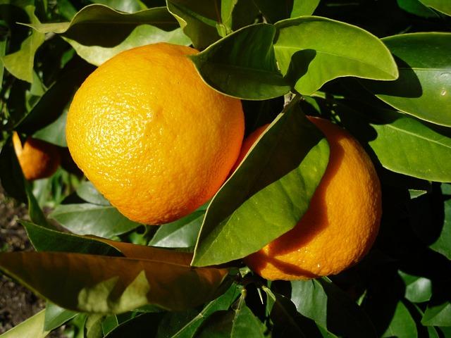 Orange, Fruit, Seville