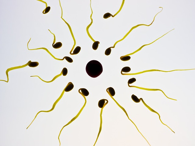Sperm, Egg, Fertilization, Sex Cell, Winner