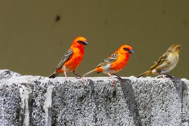 Seychelles, Birds, Tropical, Orange