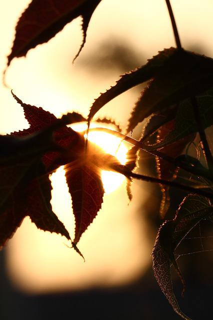 Foliage, Sunset, Shadow
