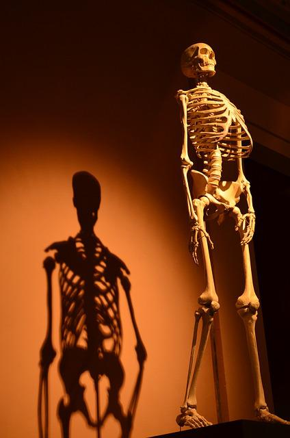 Skeleton, Shadow, Human, Anatomy, Bone, Shadow Play