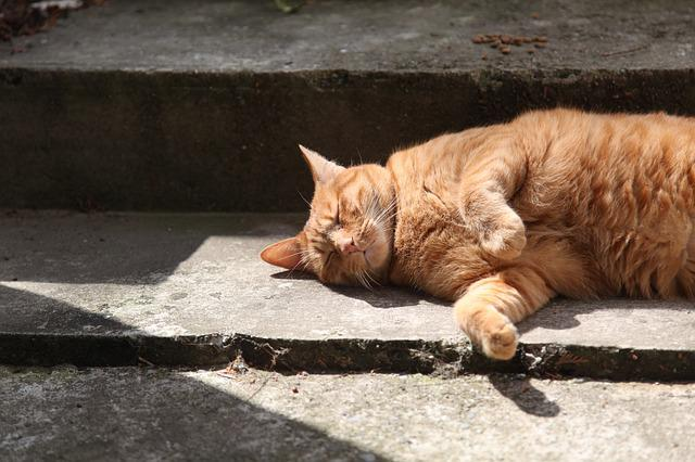Red Cat, Cat Sleeping, Staircase, Shadow