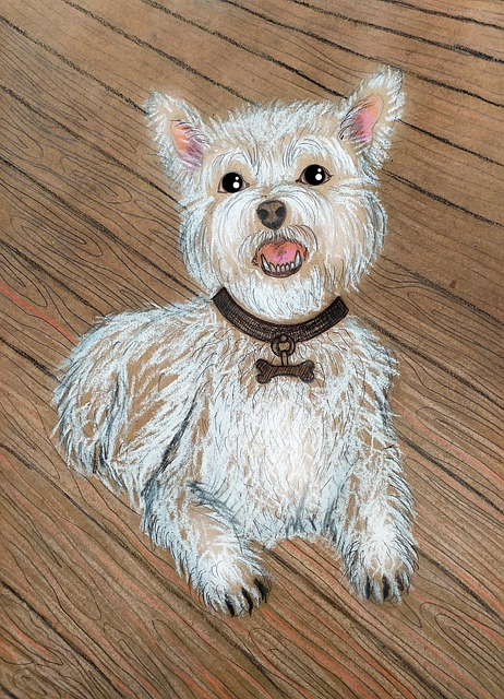 Dog, White Dog, Fluffy Dog, Shaggy Dog, Pet, Darling