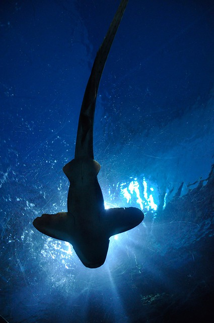 Shark, Fish, Hammerhead Shark, Aquarium, Bangkok