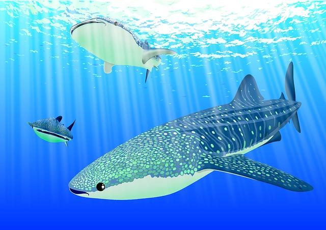Sharks, Underwater, Sea, Animal, Whale Sharks, Ocean