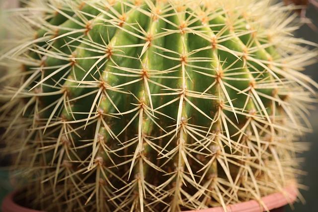 Cactus, Spine, Succulent, Sharp, Desert, Dry, Botanical