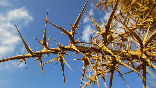 Thorns, Sharp, Plant, Nature, Painful, Spike