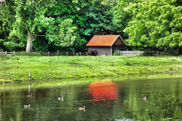 Building, Barn, Shed, Wood, Rural, Field, Forest, Pond