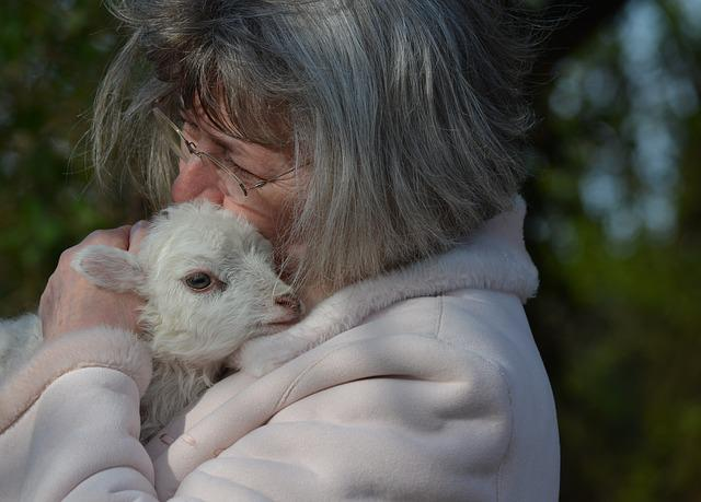 Woman, Animals, Sheep, Easter Lambs, Mecklenburg