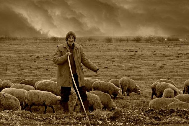Camacho, Sheep, The Flock, Nomadic, Plain