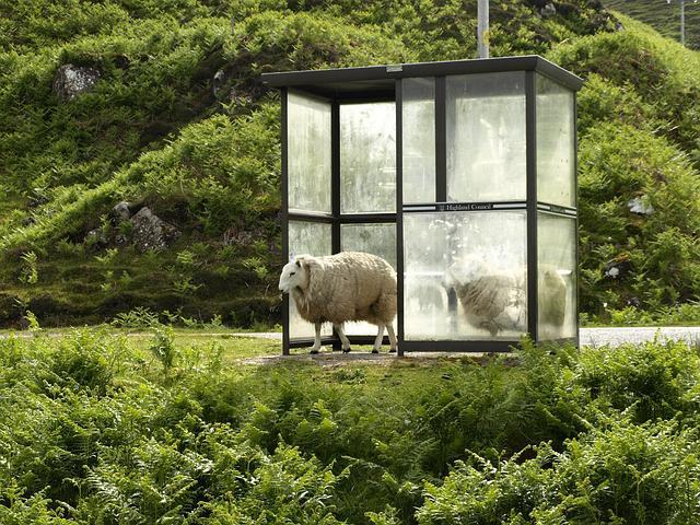 Sheep, Bus Stop, Stop, After The Rain, Sun, Shelter
