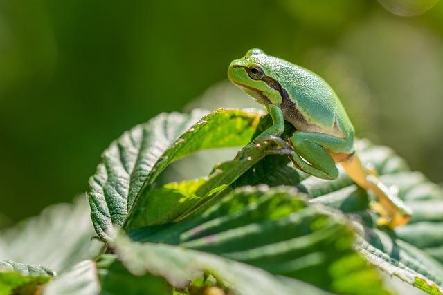 Green, Tree Frog, Sheet, Bush, Macro