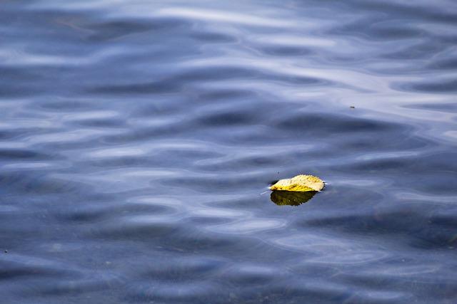 Lake, Water, Sheet In The Water, Leaf, Mirroring