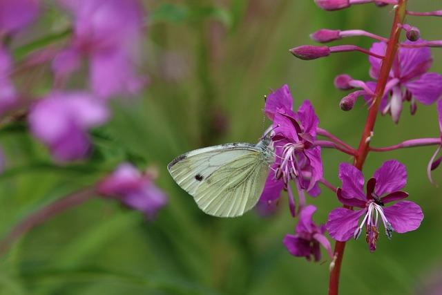 Nature, Flower, Plant, Outdoors, Sheet, Summer