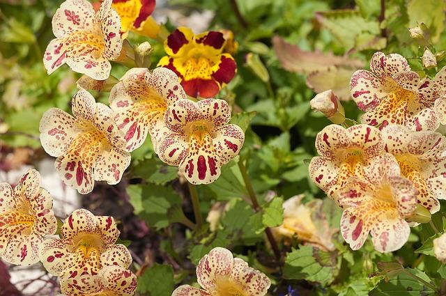 Nature, Plant, Sheet, Garden, Summer, Flower