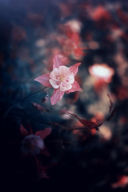 Flower, Nature, Plant, Sheet, Season, Grass, Forest