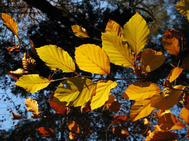 Beech Forest, Fagus Sylvatica, Sun, Sheet, Nature, View