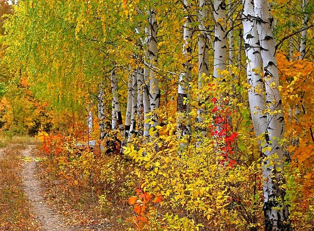 Autumn, Wood, Sheet, Nature